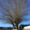 boom snoeien in Eindhoven