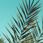 Hoe zorg je voor een olijfboom